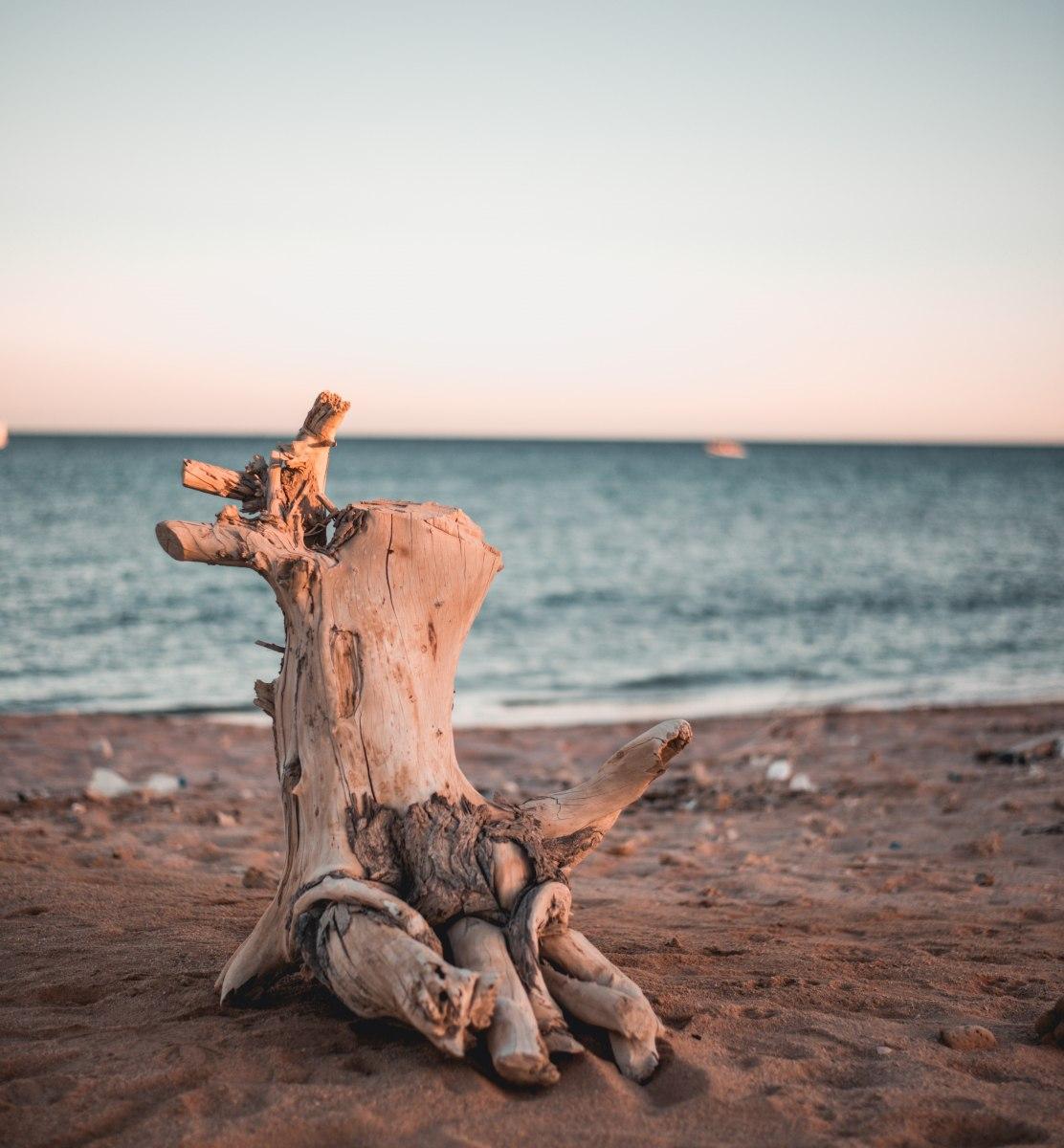driftwood on the beach