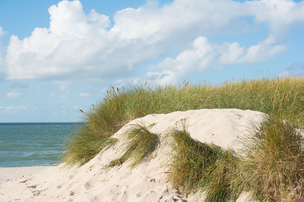 Visit Great Dunes Beach Park During Your Jekyll Island Vacation