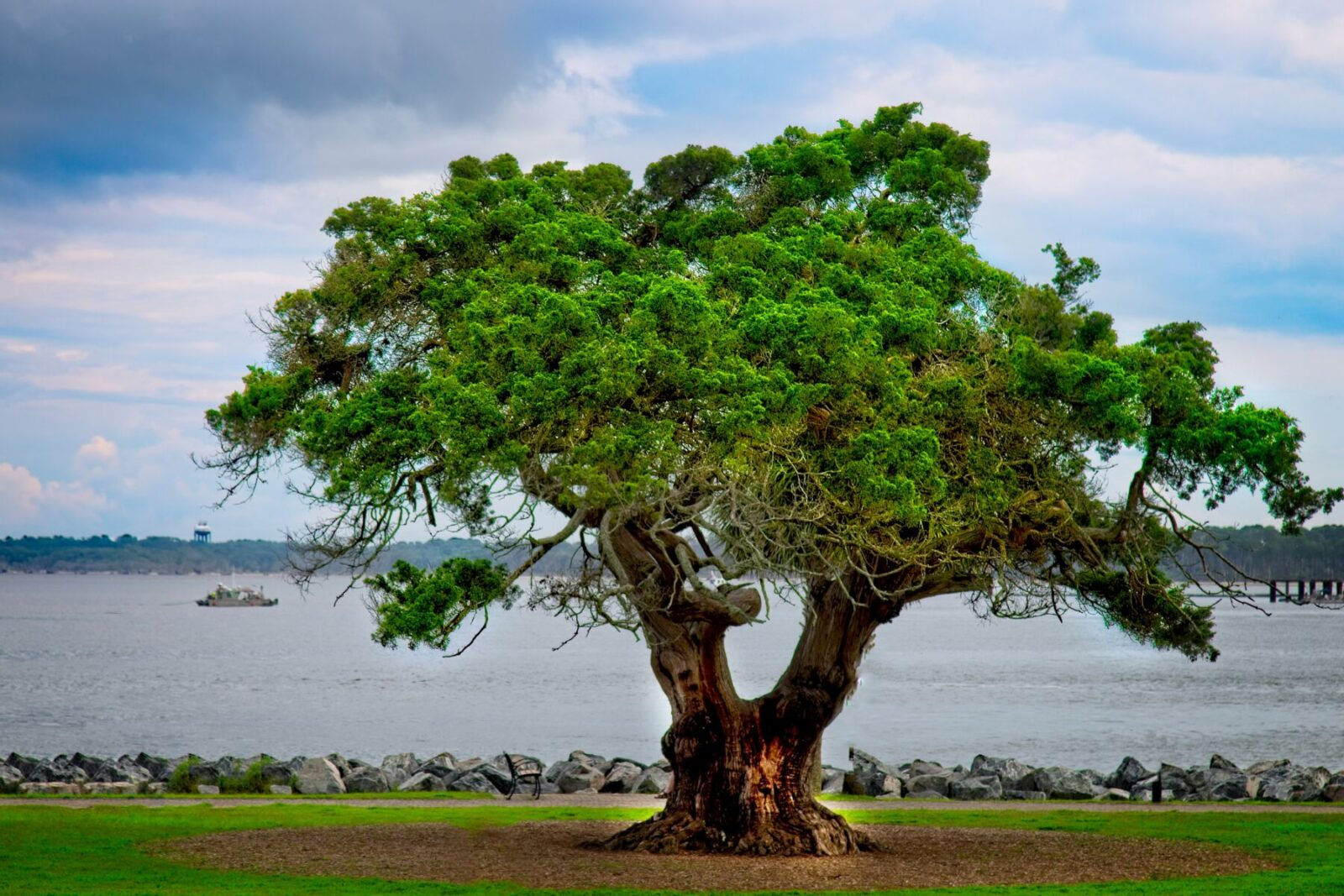tree in st. simon island